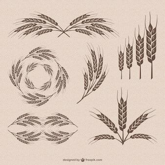 Ретро вектор коллекции пшеницы Бесплатные векторы