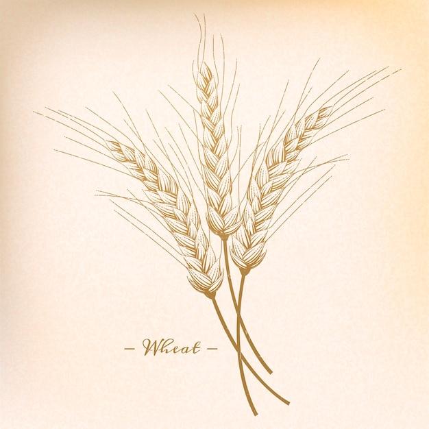 Ретро пшеница в стиле гравюры, бежевый тон Premium векторы