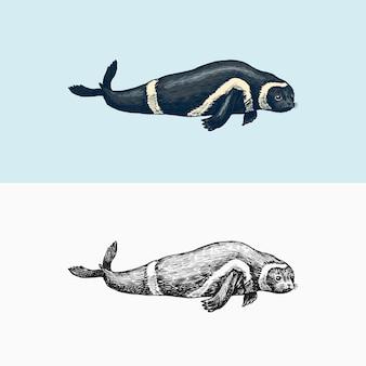 リボンシール海洋生物航海哺乳類と落書きスタイルのヴィンテージレトロな鰭脚類の動物