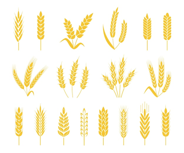 Rice or barley crops sheaf of wheat ear, grains and cereals icon vector set