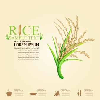 Rice logo and realistic rice background
