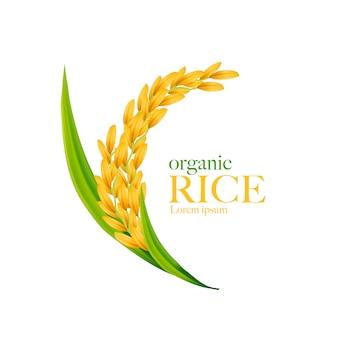 Rice realistic  illustration
