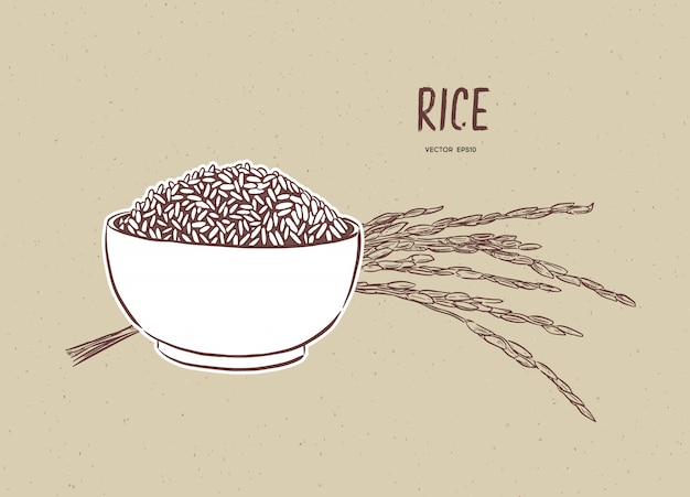 Rice vector in bowl with rice branch