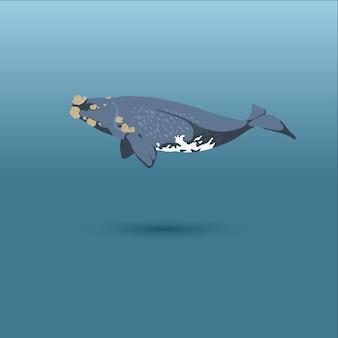 Правый кит реалистичная плоская иллюстрация