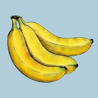 파란색 배경 벡터에 익은 신선한 바나나