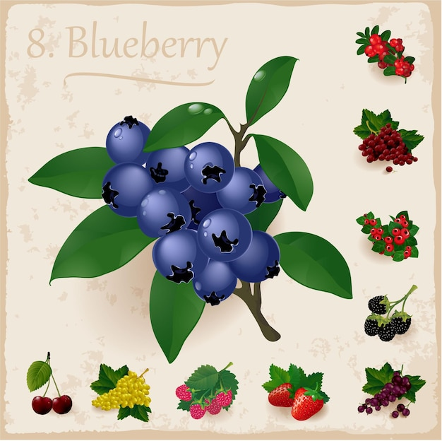 Ripe and fresh blueberries and leaves.