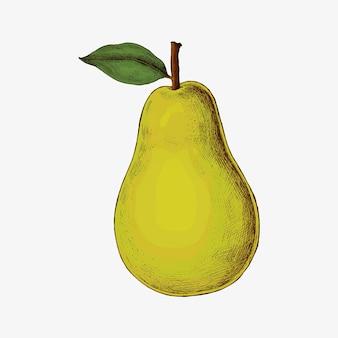 Vettore di pera verde fresca matura