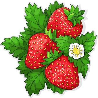 熟したジューシーなイチゴ