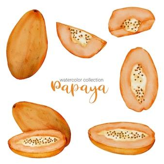 フルーツ水彩コレクションの熟したパパイヤ、フルーツとスライスでいっぱいで、半分にカット