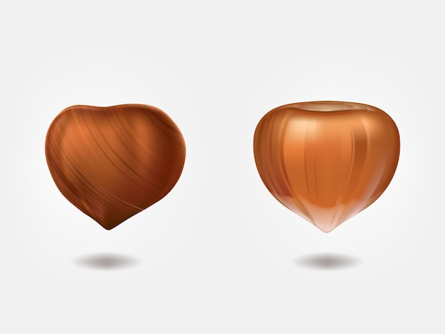 Ripe and raw hazelnuts front view Free Vector