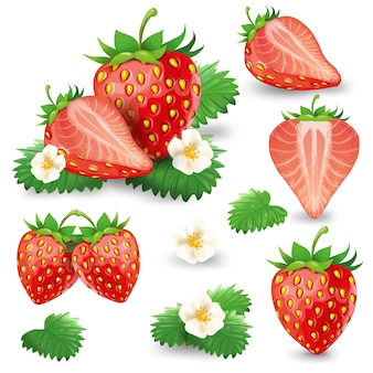 Ripe strawberry with leaves and blossom vector set