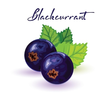Ripe, sweet and juicy blackcurrant with green leaves.