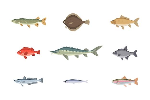 Набор разнообразных речных или морских рыб подводных водных обитателей дикой природы. различные пресноводные или морские рыбы, как тунец, лосось, сом, карп, дорадо, форель векторные иллюстрации, изолированные на белом фоне