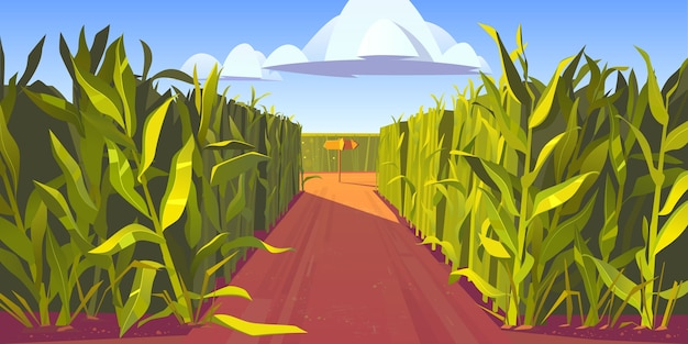 Road on cornfield with fork and wooden direction sign. concept of choosing way and making decision. cartoon landscape with tall corn stems and crossroad with pointers