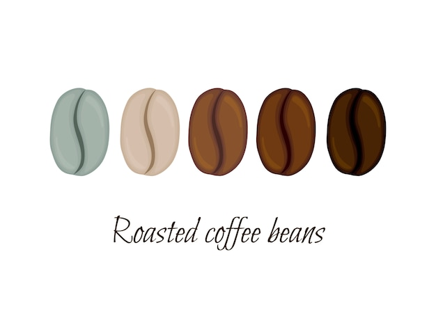 Roasted coffee beans. cartoon style.