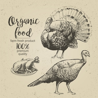 Roasted turkey - vector engraved illustration in vintage style