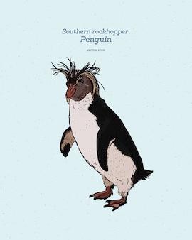 Южный пингвин rockhopper - птица из семейства пингвинов spheniscidae, старинный рисунок линии.