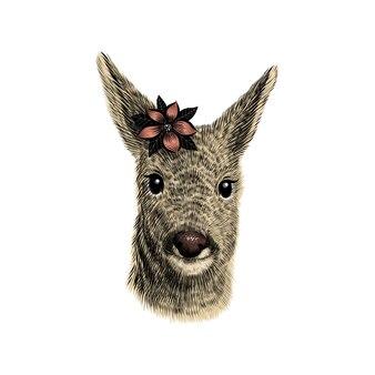 ノロジカのスケッチ、イラスト。手描きの花と野生動物の頭の肖像画