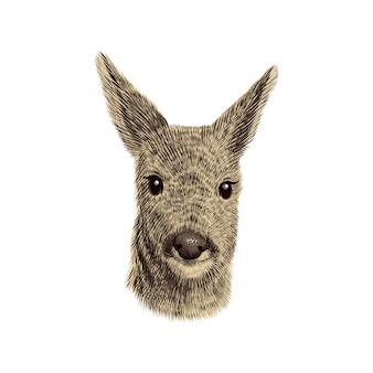 ノロジカのスケッチ、イラスト。手描きの野生動物の頭の肖像画