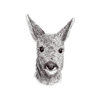 ノロジカのスケッチ、イラスト。手描きの野生動物の頭の肖像画。