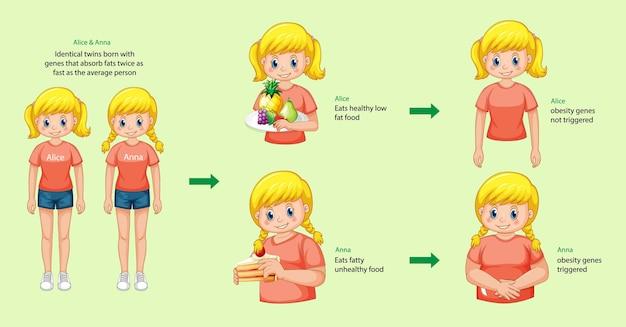 Роли генов и окружающей среды. жир в инфографике однояйцевых близнецов.