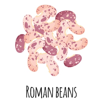 템플릿 농부 시장 디자인, 라벨 및 포장을 위한 로마 콩. 천연 에너지 단백질 유기농 슈퍼 푸드.
