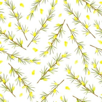 루이보스 허브 원활한 패턴 줄기와 잎과 꽃 루이보스 차