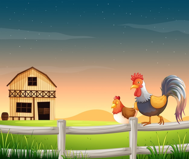 A rooster and a chicken near the barnhouse