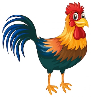 Rooster standing on white background