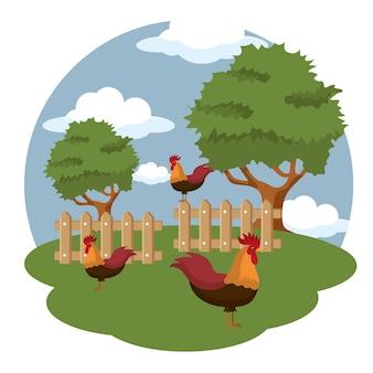 Петухи на ферме