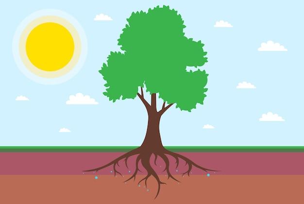 잎이 있는 나무의 루트 시스템입니다. 토양을 층으로 나누는 것. 평면 벡터 일러스트 레이 션.