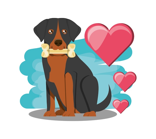 Rootweiller dog with hearts over white background
