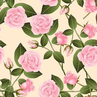 Rosa on beige ivory background