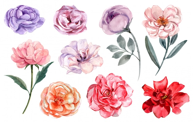 Rose in differents colours set