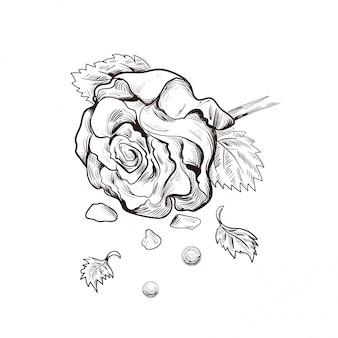 장미 꽃과 진주 고립 된 벡터 스케치.