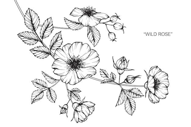 장미 꽃 그림 그리기