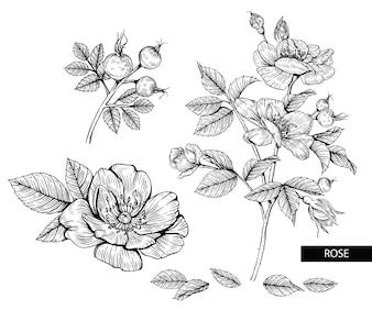 Rose flower drawings.