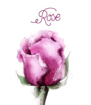 Rose flower in watercolor