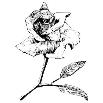 장미 꽃.