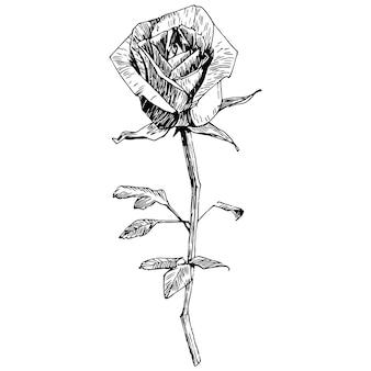 Цветок роза.