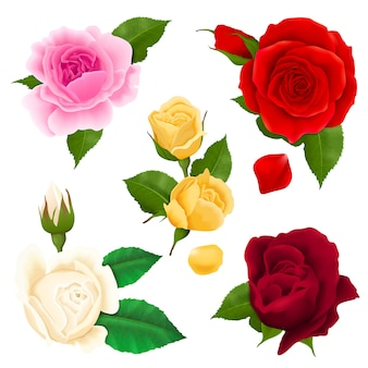Rose flowers realistic set with different colors and shapes isolated