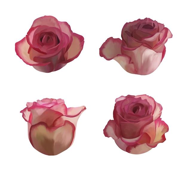 장미 꽃 세트