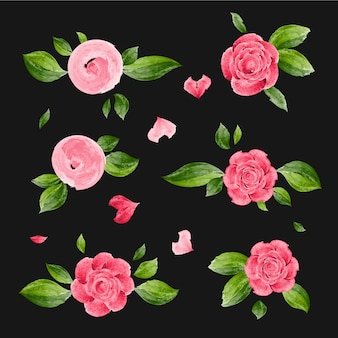 Rose flowers in watercolor style