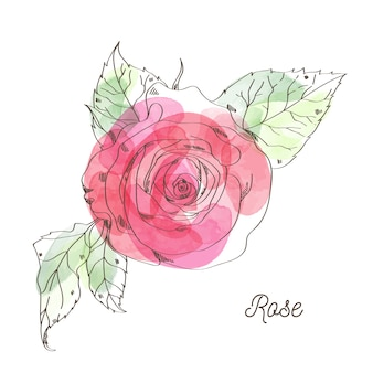 Rose illustration for valentine graphic design