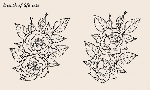Rose ornament vector set by hand drawing