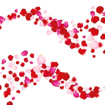 Rose petals falling background