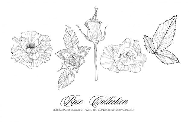 Rose sketch collection. hand drawn flower set.