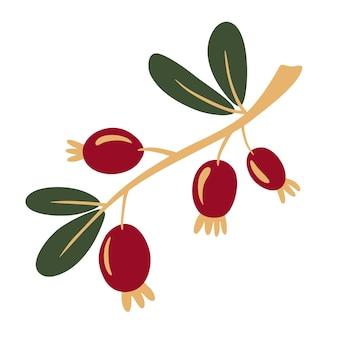 딸기와 로즈힙 지점입니다. 로즈힙, 개 로즈. 의료 식물, 허브의 개념입니다.