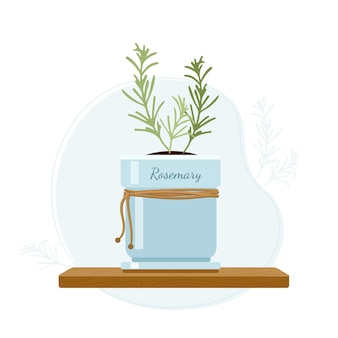 Rosemary or anthos evergreen herb in mason jar on kitchen window sill. rosemary as a flavoring in foods and perfumes.