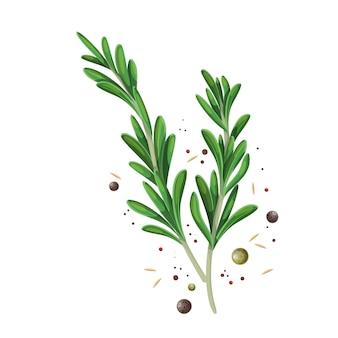 향신료 후추와 로즈마리 sprigs. 요리 허브 컬러 그림.